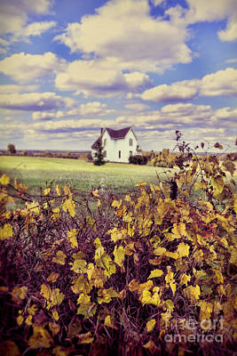 Farmhouse And Grapevines Poster by Jill Battaglia