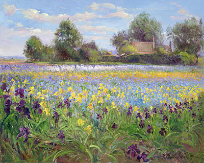 Farmstead And Iris Field Poster by Timothy Easton