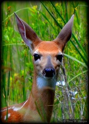 Fawn Poster by Terri K Designs