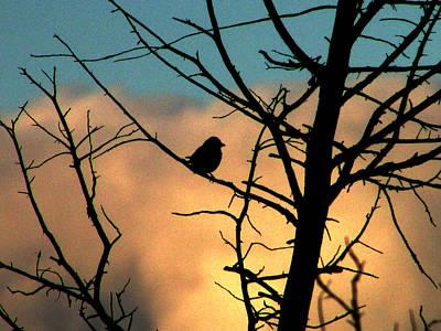 Feathered Silhouette Poster by Kimberly Mackowski