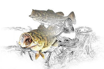 Feeding Largemouth Black Bass Poster