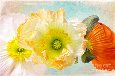 Feeling Of Summer Poster by Angela Doelling AD DESIGN Photo and PhotoArt