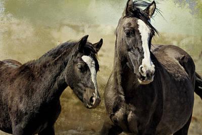 Feldspar And Ohanzee  - Pryor Mustangs Poster