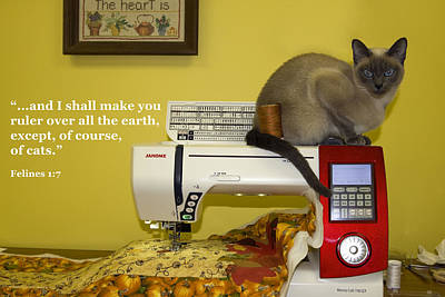 Felines Rule Poster