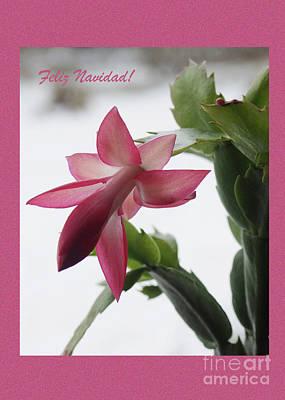 Feliz Navidad Pink Christmas Cactus Photo Greeting Card  Poster
