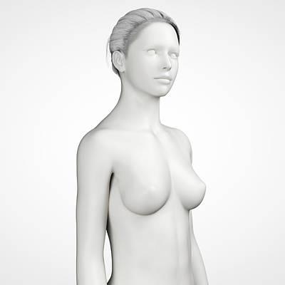 Female Anatomy Poster by Sebastian Kaulitzki