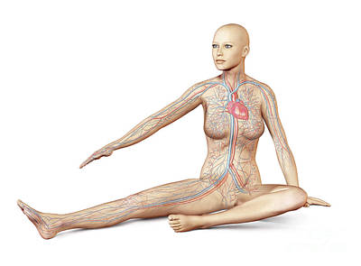 Female Body Sitting In Dynamic Posture Poster by Leonello Calvetti