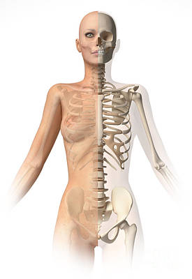 Female Body With Bone Skeleton Poster
