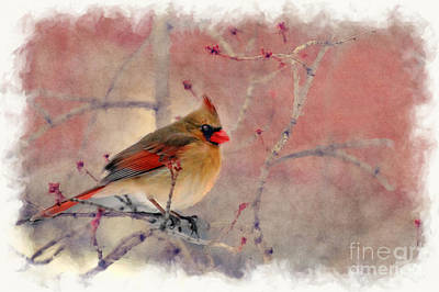 Female Cardinal Portrait Poster