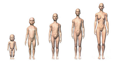 Female Human Body Scheme Of Different Poster