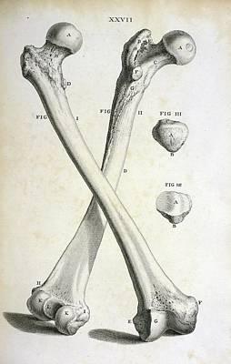 Femur Bones Poster by British Library