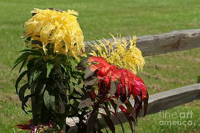 Fence Line Blossoms Poster by Theresa Willingham