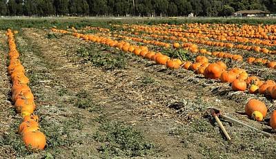 Poster featuring the photograph Fencing The Pumpkin Patch by Michael Gordon