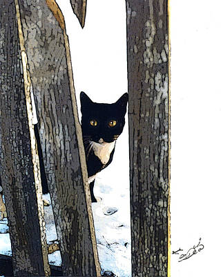 Feral By Fence Poster by Elia Peters