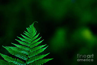 Poster featuring the photograph Fern 2012 by Art Barker