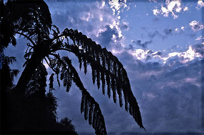 Fern At Twilight Poster
