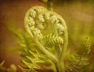 Poster featuring the photograph Fern Heart by Peggy Collins