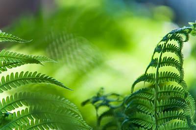 Fern Leaves. Healing Art Poster