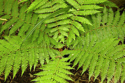 Fern Near Matai Falls, Catlins, South Poster
