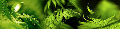 Fern Poster by Panoramic Images