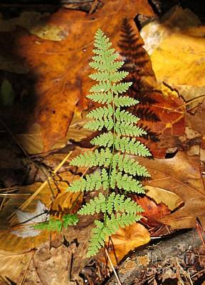 Fern Shadow Poster by Linda Marcille