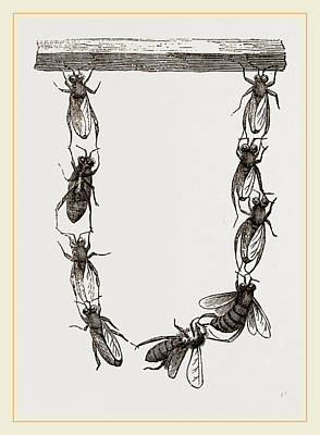 Festoon Of Wax-workers Poster by Litz Collection