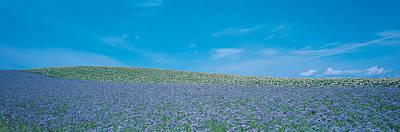 Field Biei-cho Hokkaido Japan Poster