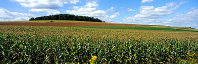 Field Of Corn With Tractor In Distance Poster