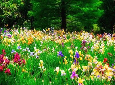 Field Of Iris Poster