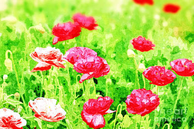 Field Of Painterly Red And Orange Poppies Poster