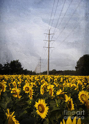 Field Of Sunflowers Poster by Elena Nosyreva