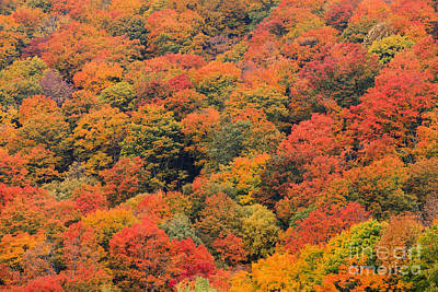 Field Of Trees From Above During Fall Foliage. Poster