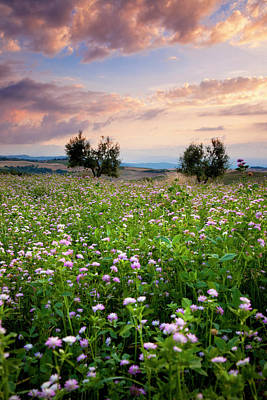 Field Of Wildflowers At Sunset Poster by Brian Jannsen