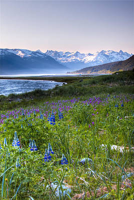 Field Of Wildflowers Near Haines Poster by Michael Criss