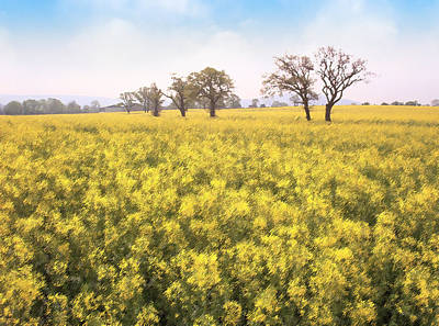 Fields Of Yellow Poster by Ron Harpham