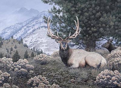 Fields Peak Elk Poster by Mike Stinnett