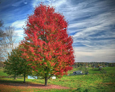 Fiery Red Maple Poster