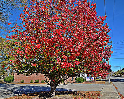 Fiery Tree Poster by Linda Brown