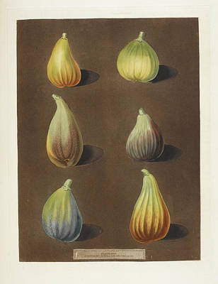 Figs Poster by British Library