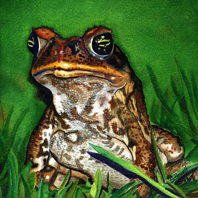 Fijian Cane Toad Sentinel Poster by Sandi Howell