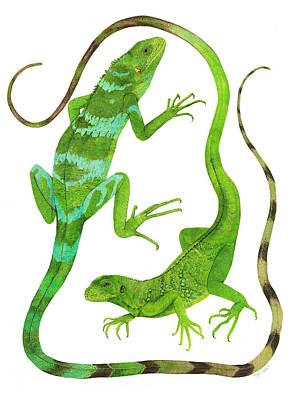 Fijian Iguanas Poster
