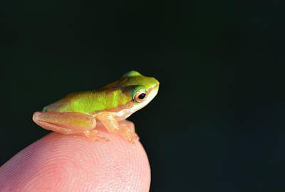 Finger Tip Baby Frog Poster