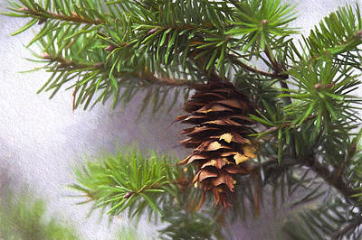 Fir Cone Digital Painting Poster by Sharon Talson