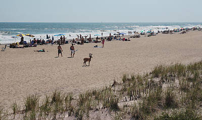 Fire Island Beach With Deer Poster