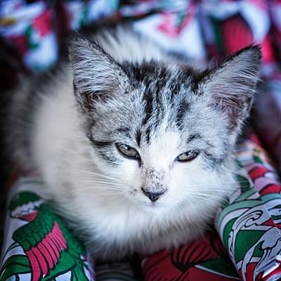 Poster featuring the photograph Firecracker Kitten by Zoe Ferrie