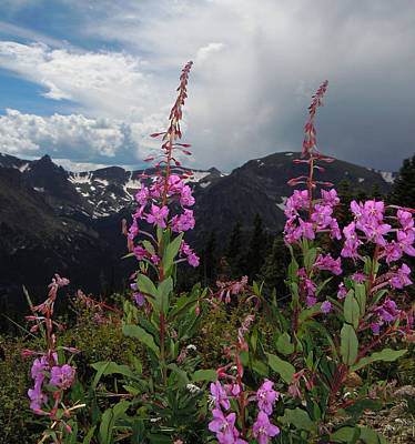 Fireweed And Hayden Spire Poster by Heather Coen