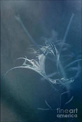 Fireweed Blues Poster by Liz  Alderdice