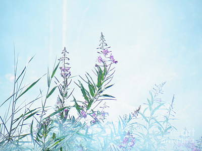 Fireweed Number Two Poster by Brian Boyle