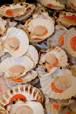 Fish Market Scallops On Display Poster by Darrell Gulin
