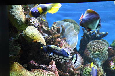 Fish - National Aquarium In Baltimore Md - 1212114 Poster by DC Photographer